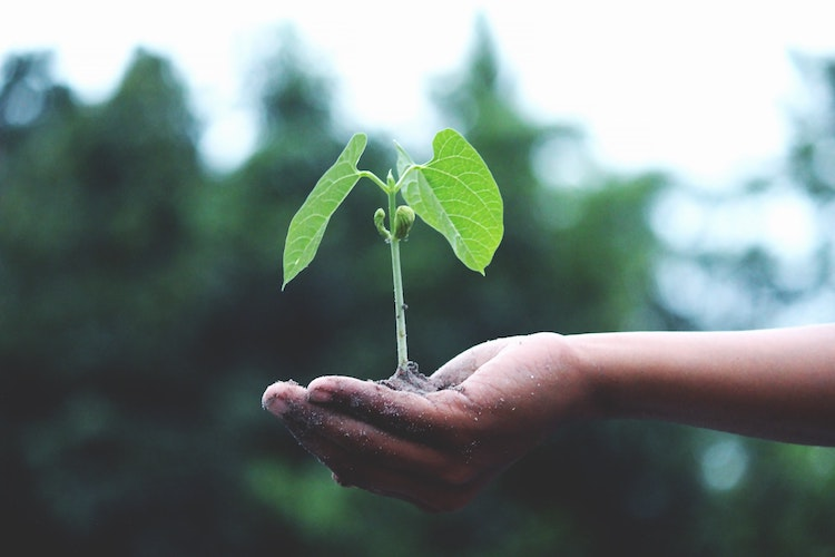 Growing plant in hand representing growth of shares for children.